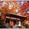 常寂光寺位於小倉山的一座山寺,寺院無牆垣,靜謐清幽。宛如諸佛如來法身所居之淨土而得名。