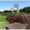 台中~紫葉の狼尾草