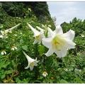 遊客可沿著木棧步道登上基隆嶼燈塔,春天的百合花與秋天的石蒜花最值得探訪。