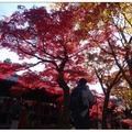 京都~東福寺の紅葉