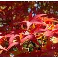 京都東福寺為日本鐮倉及室町時期的珍貴禪宗建築。每當秋天時節由「通天橋」至庭園間,眼簾儘是嫣紅醉人的紅葉,讓旅人佇足陶醉其中。
