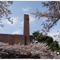「鎮海軍港節」的櫻花慶典,吸引眾多遊客造訪,海軍士官學校其中必訪景點。