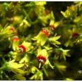 秋日是欒花花開的季節,滿樹黃艷朵朵嫣紅點綴其中,陽光下更是耀眼。