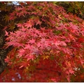 楓紅的時節來到「南禪寺」,寺內處處皆是濃濃的秋意。  「南禪寺」為日本京都一所佛教寺院,是臨濟宗南禪寺派大本山。