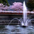 難得跟著史上最老背包客 到京都拍攝櫻花 衝著大家年歲不小 卻也充滿鬥志  最後還平安回家 就值得好好給它記錄一番 以茲紀念