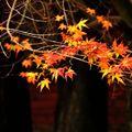 春花秋葉 是攝影人的最愛 在秋山紅葉下 陶醉其中 快門摁不停 心情跟著嗨