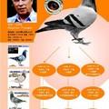 20150403德國賽鴿運動的藝術家無環號締造者根特布朗格鴿系介紹 - 1