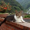 有勞火車、巴士穿梭於山間體驗 九份的山城之美、猴硐的貓咪寫真。