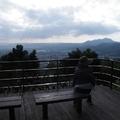 [淡水]2016櫻花記0131