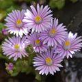不知名的小花