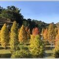 旅遊中辨識了落葉松、落羽松、水杉