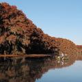 凱多湖 ~ 秋色 • 飛鳥 • 落日 • 晨霧 • 楓葉