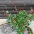 來看看生活周遭生命強又好看的青草植物