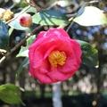 天母古道是昔日金山往來台北魚路古道的一部份,步道從陽明山山仔后到山腳下的天母。花卉試驗中心,有茶花五百餘種一萬多株。