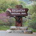 兩天一夜遊,Fresno & Sequoia National Park