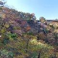 2019秋遊日本東北-鳴子峽