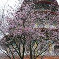 粉紅繽紛 天元宮