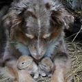 狗媽媽愛兔寶寶之母愛無國界