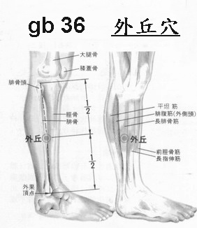 Gb 36 Acupuncture Point
