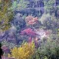 濟南紅葉谷,在濟南的郊區,每年都舉辦紅葉節, 這山谷滿山遍野長了落葉灌木黃櫨,非常的好看.......
