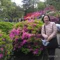 六義園是日本東京都九大名園之一,都立庭園兼具自江戶、明治、大正時代傳承下來的歷史、文化、自然,被指定為東京都的文化遺產。