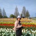 A KE BO 農業公園。所種出來的鬱金香,各式各樣的色彩拼成美麗圖案,很像來到了歐洲的荷蘭