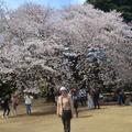 新宿御苑是屬於東京都心最精華地段,佔地58公頃,綠地寬敞。春夏秋冬都有可供觀賞的景色。