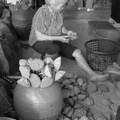 觀音鄉康莊蓮園的採蓮子與香酥蓮子