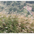 深秋滿山芒飛,踏訪七星公園步道的生態點滴。