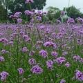 花露休閒農場位於苗栗卓蘭。