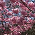 粉紅的浪漫--武陵