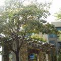 台南市南區2