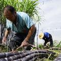 台灣農事影像紀錄