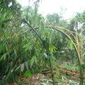 2012-06-20泰利颱風~雲林古坑農業災害