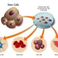 *幹細胞照片0006