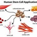 *幹細胞照片0017