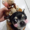 分享我的寶貝寵物低可愛照片喲~!  寵物:狗狗(球球和涼涼)、貓咪(斑斑)、鼠鼠(菊丸&龍貓&愛哭鬼)、兔仔(JIRO&小兔將)