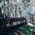 (266)墨爾本-丹頓農區古董蒸汽火車