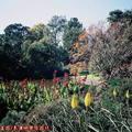 (238)墨爾本-皇家植物園