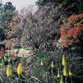 (240)墨爾本-皇家植物園