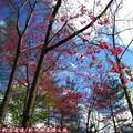 (062)新中橫-路邊停車場之山櫻花