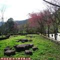 (064)新中橫-路邊停車場之山櫻花
