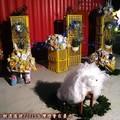 (284)民俗文化燈區-天主教會之環保小羊