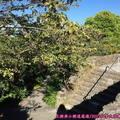 (441)溫哥華-伊利莎白皇后公園