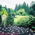 (331)溫哥華-伊利莎白皇后公園