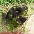 (098)滿月圓森林遊樂區-熊頭枯木