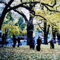 (226)墨爾本-費茲洛花園之秋天景致