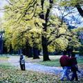 (227)墨爾本-費茲洛花園之秋天景致