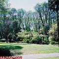 (235)墨爾本-費茲洛花園之春天景致