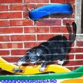(04)雲林頂溪社區-屋頂上的貓